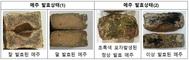 장 맛은 메주!... 경북도, 품질 좋은 메주 제조 매뉴얼 배부