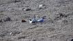 안동호 쇠제비갈매기, 전국 최초 인공모래섬에 안착