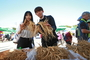 믿고 찾는 건강축제…'영주 풍기인삼축제' 개막